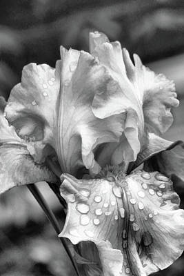 Digital Art - Iris In Black And White by Bonnie Willis