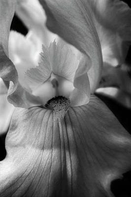Photograph - Iris In Black And White by Chrystal Mimbs