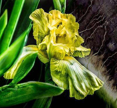 Iris In Bloom Two Art Print