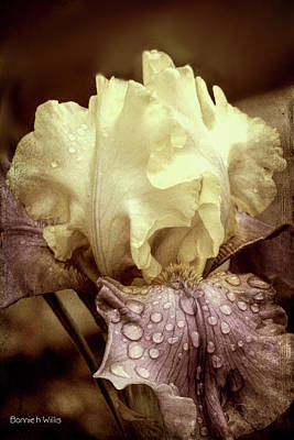 Digital Art - Iris In Decay by Bonnie Willis