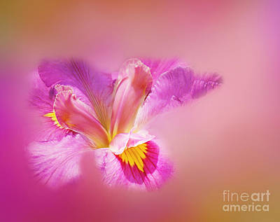Photograph - Iris In Mist by Judi Bagwell