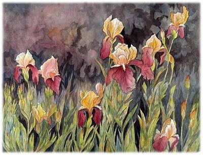 Iris In My Backyard Art Print by Ping Yan