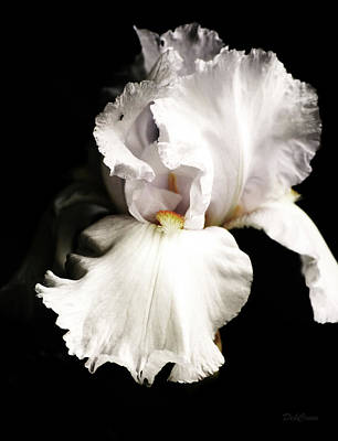 Photograph - Iris In Pose by Deborah  Crew-Johnson