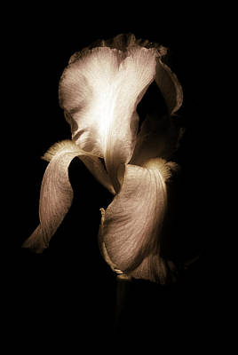 Yellow Photograph - Iris In Sepia by Greg Mimbs