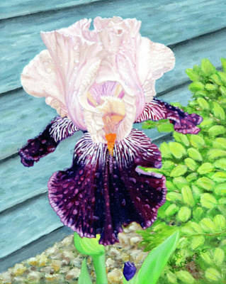 Iris In The Spring Rain Art Print