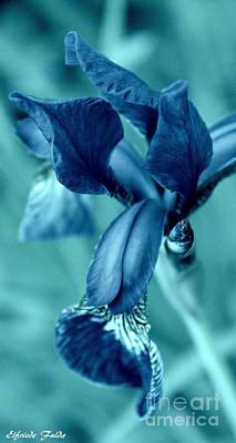 Mixed Media - Iris In Turquoise by Elfriede Fulda