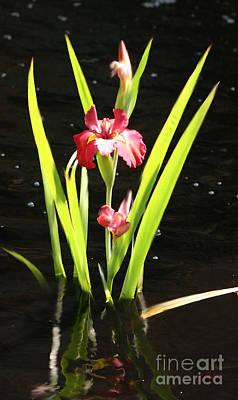 Digital Art - Iris In Water by Lisa Redfern