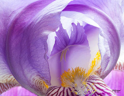Photograph - Iris Is My Name by Don Anderson