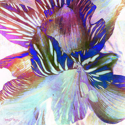 Digital Art - Iris Iv by Barbara Berney