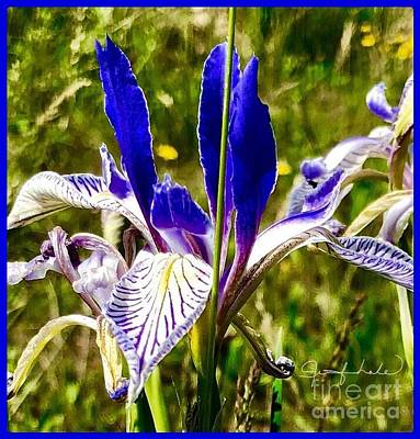Photograph - Iris by Jennifer Lake
