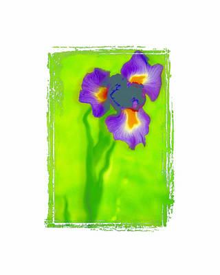 Iris Art Print by K Randall Wilcox