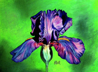 Indigo Drawing - Iris by Laura Bell