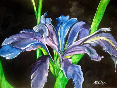 Iris Art Print by Lil Taylor