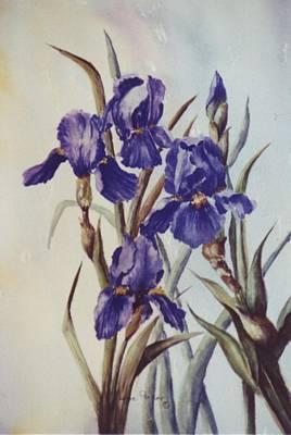 Iris Art Print by Lynne Parker