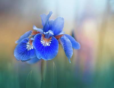 Iris Photograph - Iris by Magda Bognar
