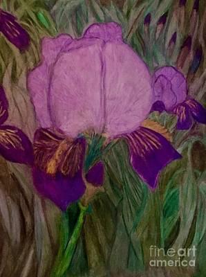 Drawing - Iris - Magic Man. by Dayna Winters