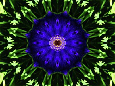 Photograph - Iris Manipulation  by Karen Stahlros