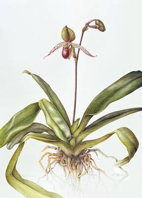 Irises Drawing - Iris by Margaret Ann Eden
