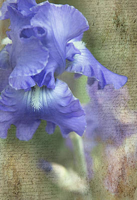Photograph - Iris Memories by Angie Vogel
