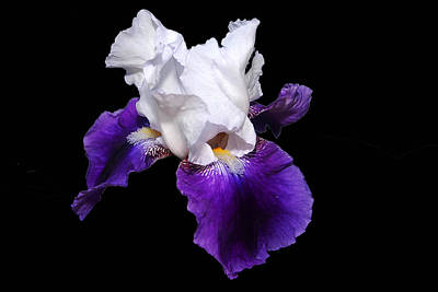 Photograph - Iris Number One by David Hamilton