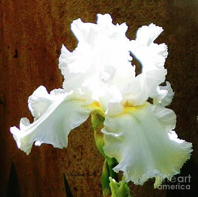 Photograph - Iris Of White 2 by CheyAnne Sexton