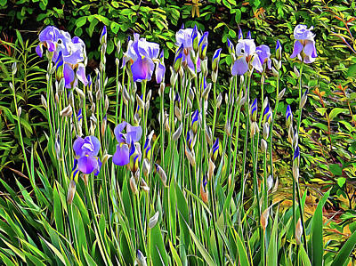 Photograph - Iris On A Woodland Edge by Dorothy Berry-Lound