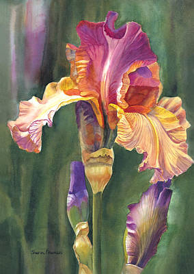 Floral Watercolor Painting - Iris On The Warm Side by Sharon Freeman
