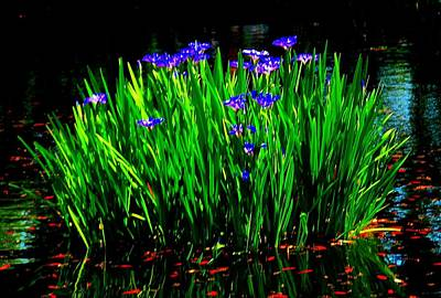 Photograph - Iris On The Water by Beth Akerman