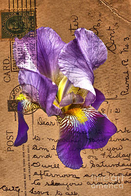 Photograph - Iris On Vintage 1912 Postcard by Nina Silver
