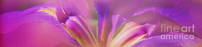 Photograph - Iris Panorama by Judi Bagwell