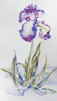Art Print featuring the painting Iris Passion by Mary Haley-Rocks