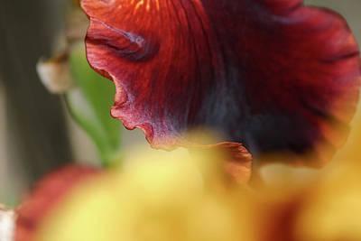 Iris Petals 2 -  Art Print