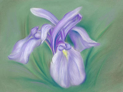 Pastel - Iris Purple by MM Anderson
