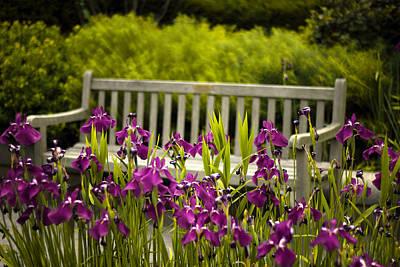 Springtime Digital Art - Iris Respite by Jessica Jenney