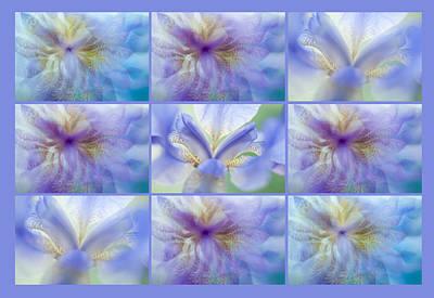 Photograph - Iris Rhapsody In Blue. Polyptych by Jenny Rainbow