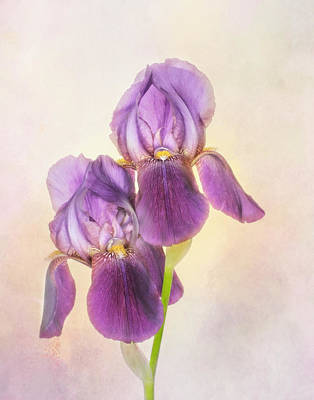 Photograph - Iris Royalty by David and Carol Kelly