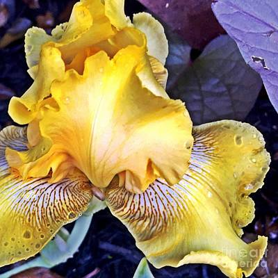 Photograph - Iris Supreme by Vonda Lawson-Rosa