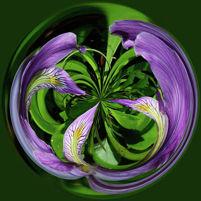 Photograph - Iris Swirl by Tikvah's Hope