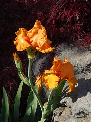 Photograph - Iris The New Orange by Jacqueline  DiAnne Wasson