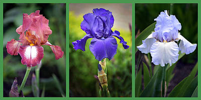 Photograph - Iris Triptych. by Terence Davis