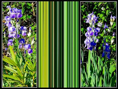 Photograph - Iris Triptych by Dorothy Berry-Lound