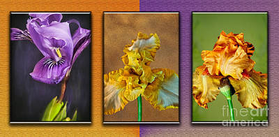 Photograph - Iris Trytypch by Shirley Mangini