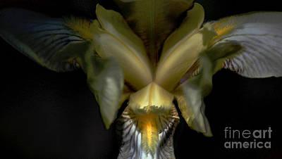 Photograph - Iris Two by David Lane