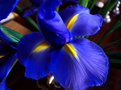 Iris Unfolding Art Print