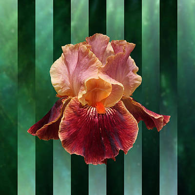 Photograph - Iris Unleashed by Debi Dalio