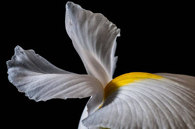 Photograph - Iris Wings by Art Barker