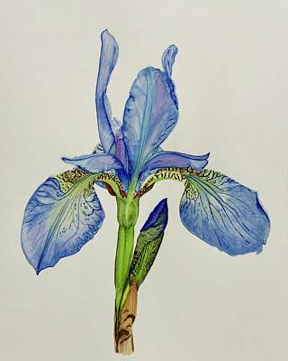 Painting - Iris You Were Here by Sonja Jones