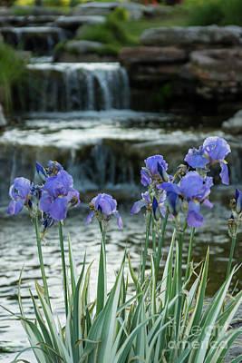 Photograph - Irises At Chateau by Jennifer White