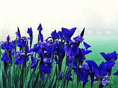 Photograph - Irises At Dawn 2 by Sarah Loft