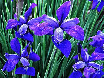 Photograph - Irises At Dawn 4 by Sarah Loft